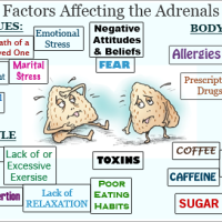 Balancing Adrenal Fatigue to Support Weight Loss